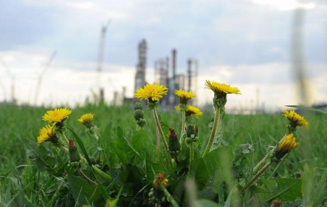 категории опасности организации для окружающей среды